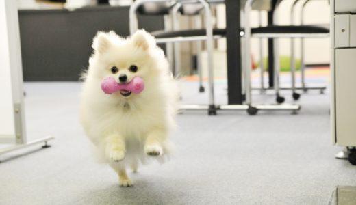 犬が悲鳴のような鳴き声をあげるのはなぜ?怪我や病気の可能性も?