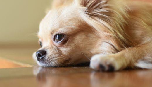 愛犬がご飯を食べない!何日まで様子見するべき?病気の可能性も?