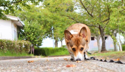 犬の呼吸がフガフガしていて心配!苦しそうなときの対処法をチェック!