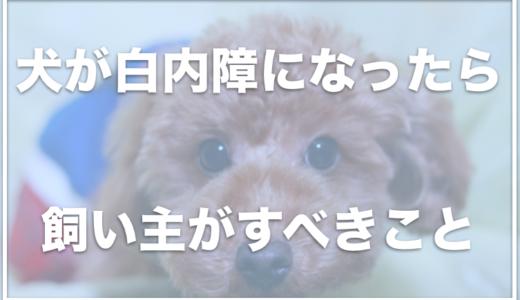犬が白内障になったら飼い主さんがすべきことは5つ!予防はできるの?