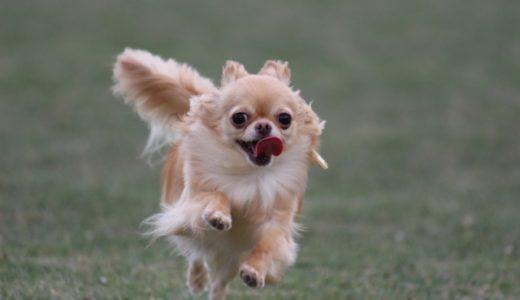 犬がハァハァと落ち着きがないのはなぜ?考えられる6つの原因をチェック!
