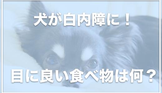犬の白内障に効く食べ物はこの4つ!目にいい食べ物やサプリはコレ!