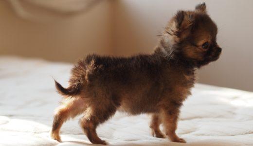 中国産のペットフードの銘柄はこちら!中国産の犬のおやつで死亡事故も!