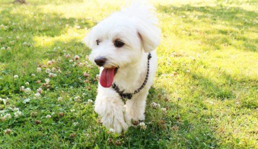 犬が急に元気がなくなるのはなぜ?病気や貧血の可能性も?チェックすべき5つのこと!