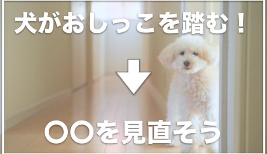 犬のトイレの足濡れ対策はコレ!おしっこを踏んで床に足跡がついてしまうのを解消する方法はこちら!