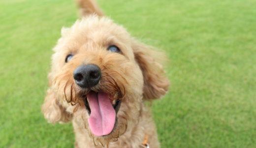 犬の熱中症対策と予防!正しく回復する手段を学んでおこう!