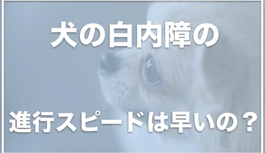 犬の白内障の進行スピードは早い?白内障は何歳からなるの?