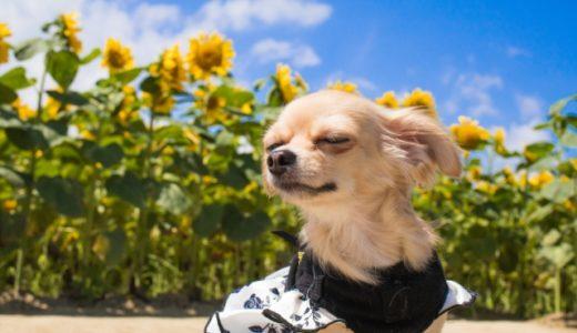 【危険】犬の夏の暑さ対策にエアコンなしは無理?保冷剤・アイスノンもおすすめ?