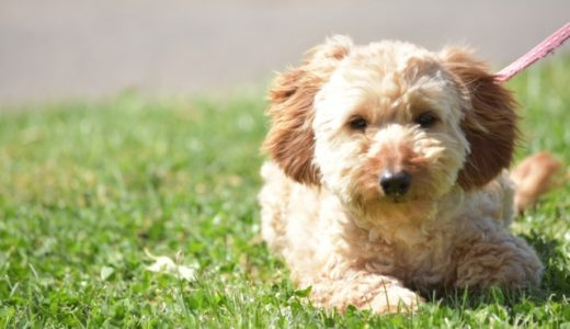犬に扇風機は意味がないって本当!?涼しいと感じるのは人間だけ?