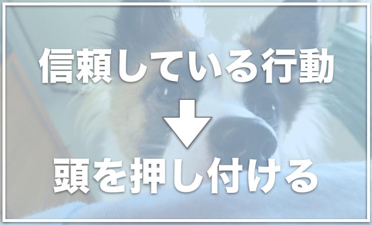 犬が飼い主を信頼している行動10選 飼い主を好きすぎる犬はどんな行動