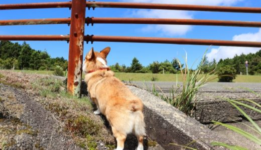 犬がおしりを向けるのは愛情表現?実は信頼されている証拠だった?