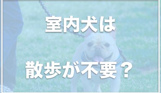 散歩に行かなくていい犬は何?室内犬は散歩が不要って本当?