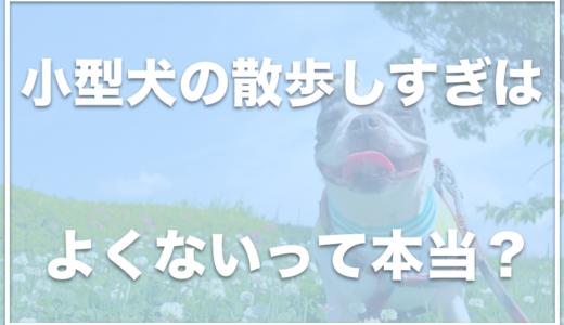 小型犬の散歩しすぎは良くない!?小型犬だと散歩がいらないって本当?