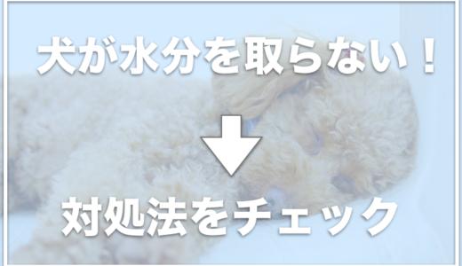 犬が水分を取らない!水分補給のためにゼリーやスポーツドリンクはいいの?