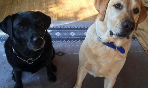 白井家(白井鴻明)が飼っている犬6匹の紹介!犬種と名前・画像をチェック!