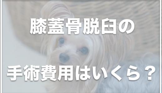 犬の膝蓋骨脱臼(パテラ)手術の費用はいくら?手術に失敗することはあるの?