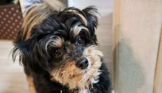 飼い主に愛されてる犬の特徴とは?注意すべき行動も!