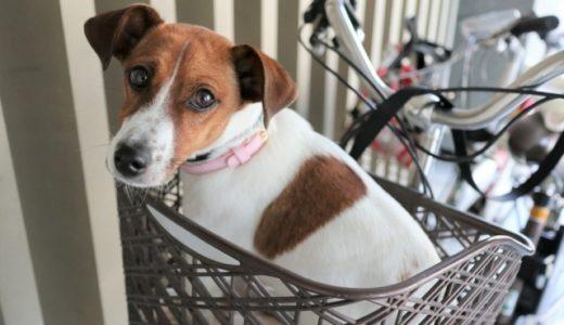 犬を自転車かごに入れるのはNG!?道路交通法違反になるの?カゴから落ちる子も!