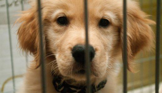 犬のうんちが白っぽい!?便が白い場合は病気や寄生虫の可能性も!