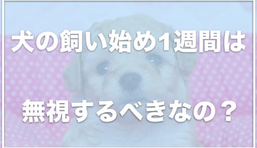 【子犬のお迎え】当日から1週間は無視ってホント?過ごし方と飼い主がやるべきこと4選
