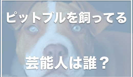 ピットブルを飼ってる芸能人は誰?日本で飼うには許可がいる?事件についても調査!