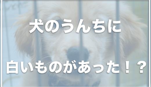 犬の便の表面に白いものがあって心配!白い塊や白い粘液がある場合は注意?