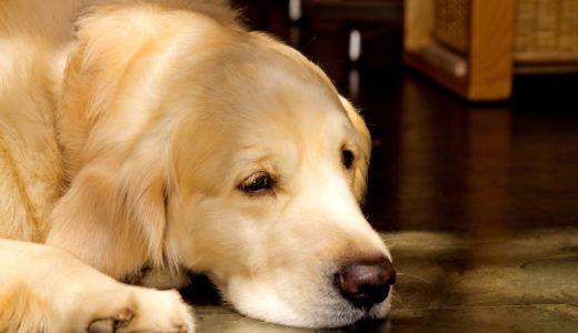 犬が自分の手をなめる理由は何?ストレスやアレルギーが原因かも!?