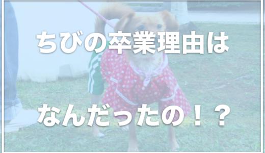 志村どうぶつ園のちびの卒業理由は何だったの?現在の飼い主は朝日山親方?