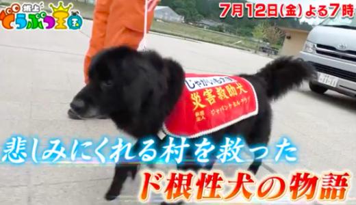 災害救助犬じゃがいもの犬種は何?性格は臆病でそれが原因で10回試験に落ちた?