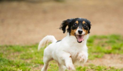 ペットショップで売れ残りになった犬を引き取りたい!方法はこちら!