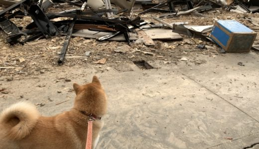 災害時に犬に必要なものは何?犬と避難するために持ち物を備えておこう!