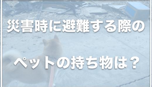 災害時のペットの持ち物は?犬のために防災で必要なものをチェック!