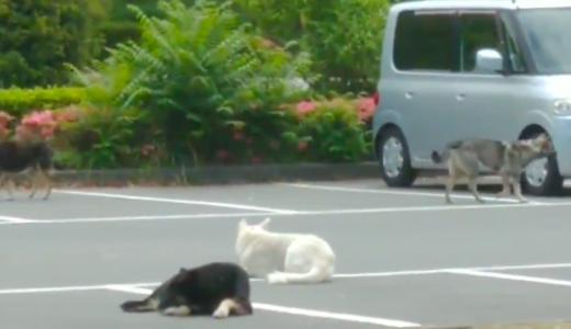 山口県周南市の緑地公園に野犬がたくさんいるのはなぜ? 保護されるの?虐待問題も!