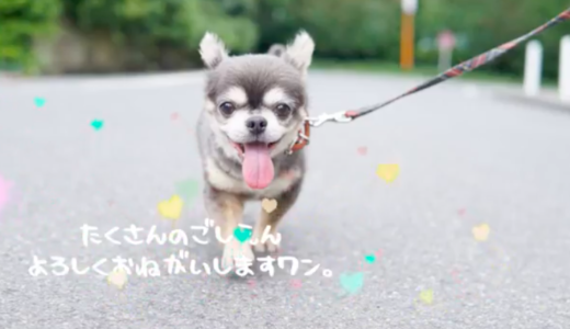 ラズおじさんの飼い主は長屋有紀さん!?犬種はチワワでグッズもあるの?