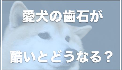 犬の歯石がひどい!歯石取りの値段はいくら?ペット保険は使えるの?