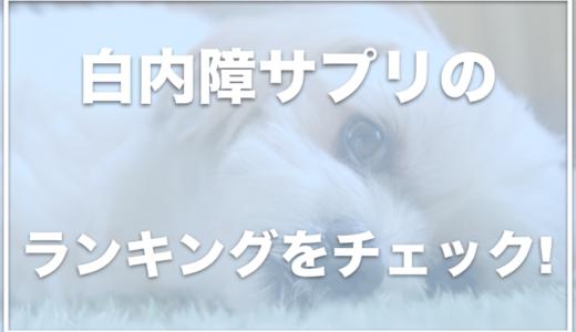 【徹底比較】犬の白内障サプリランキング!全額返金保証付きで試せるサプリはコレ!