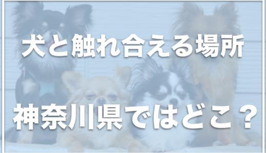 犬と触れ合える場所は神奈川県ではココ!入場料無料の施設も!?