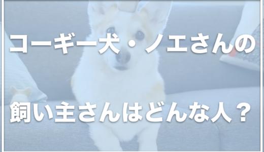 コーギー犬ノエルは北海道に住んでいる?飼い主さんはどんな人なの?