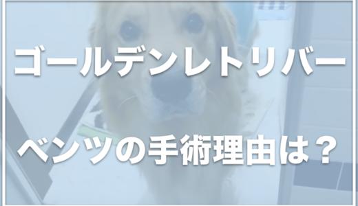 ゴールデンレトリバー・ベンツの飼い主は福岡に住んでる?手術した理由は何だった!?