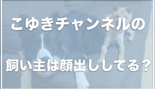 こゆきチャンネルの飼い主の顔とお仕事は?保護犬活動中なの?
