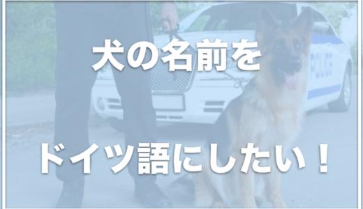 犬の名前にドイツ語をつけたい!オスにかっこいいドイツ語の名前をつけたい人はチェック!メスにもおすすめ?