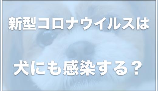 コロナウイルスは犬も感染する!?症状・対処法や検査方法・除菌薬をチェック!
