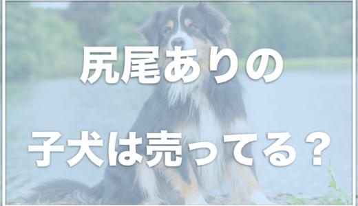 オーストラリアンシェパードの尻尾ありは売ってる?値段や子犬の輸入方法を調査!