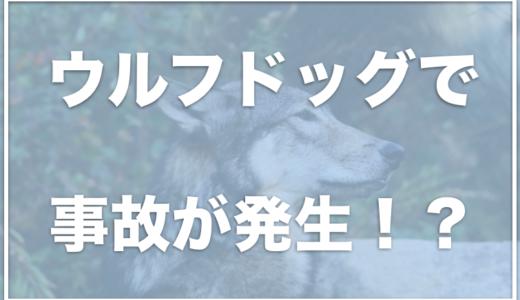 ウルフドッグ(狼犬)のブリーダーの死亡事故がひどい!?大きさや値段・飼ってる人をチェック!