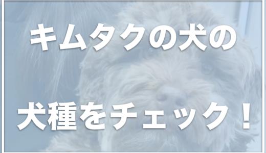 キムタクの犬の種類は?アムの犬種は何?愛犬の値段もチェック!